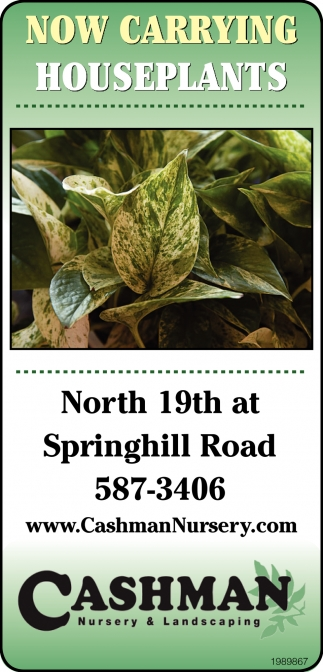 Now Carrying Houseplants